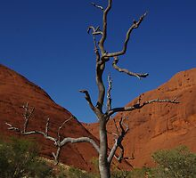 Lone Tree - Kata Tjuta by Linda Fury