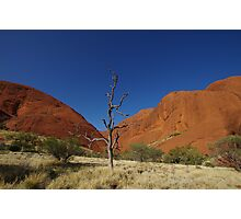 The Olgas & a Lone Tree Photographic Print