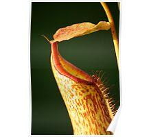 Speckled pitcher Poster