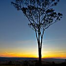 Lone Tree Sunset by bazcelt