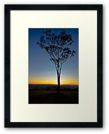 Lone Tree Sunset by bazcelt