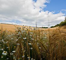 Amongst The Barley by TTCIMAGES