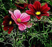 Cosmos in full Bloom by tangerinesoul