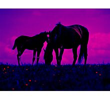 Horse & Filly Photographic Print