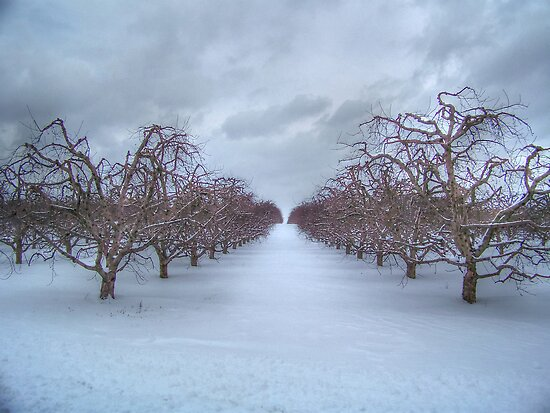 Peach Orchard Snow  by James Brotherton