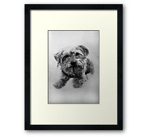 Chester - Dog Portrait Framed Print