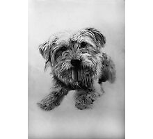Chester - Dog Portrait Photographic Print