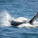 Humpback Calf by Kymbo
