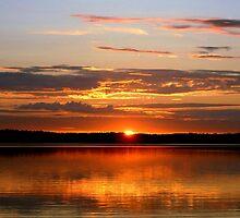 Midnight Sun by Alan Hogan