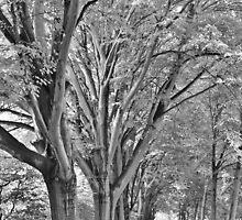 Oranjepark, Vlaardingen by Stephanie Owen