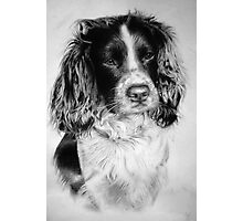 Fin - Dog Portrait Photographic Print