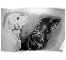 Jem and Tarka - Dog Portraits Poster