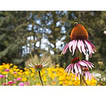 Bee-cause  Photographic Print