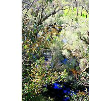 It's Spring Time Photographic Print