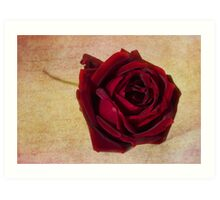 Papa Meilland......A red red rose.. Art Print