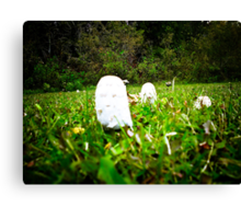 Toad Stools growing in a field Canvas Print