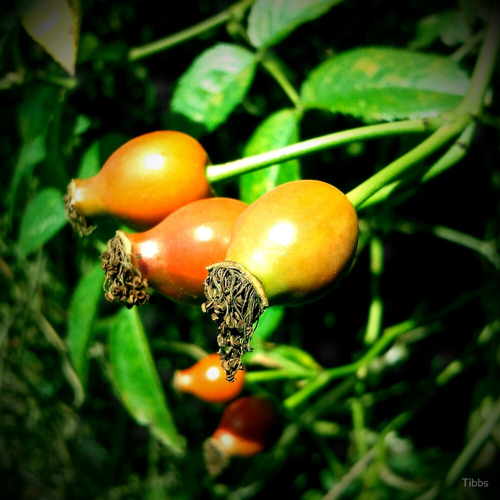 Very berry by Tibbs