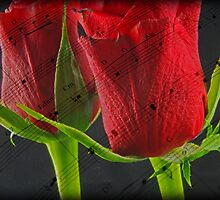 Music & Roses by nicfarrington