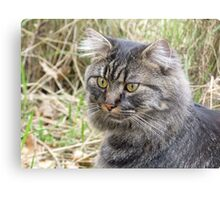 Spook the Maine Coon Metal Print