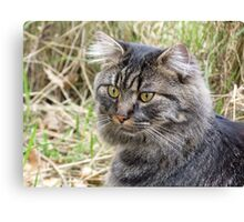 Spook the Maine Coon Canvas Print