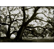 Oak Alley Trees Photographic Print