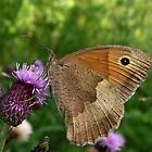 Meadow Brown by SophiaDeLuna