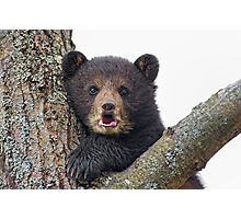 Cub in a tree Photographic Print