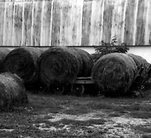 Hay is for horses... by klmiller