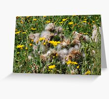Thistle Patch Greeting Card