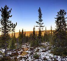 Autum forrest in Lappland by Martin Kurkkio