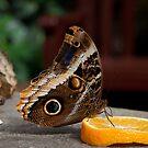 Feeding on an Orange by DaleReynolds
