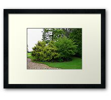 Bushy Tree's Framed Print