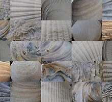 Close-Up Shells 5x5 by cuilcreations
