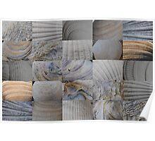 Close-Up Shells 5x5 Poster