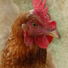 A Happy Chook by Eve Parry