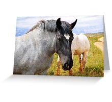 Beautiful Gray Draft Horse Greeting Card