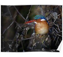 Malachite Kingfisher Poster