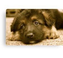 Puppy Dog Eyes-(German Shepherd Puppy) Canvas Print