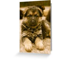 How To Be Cute (German Shepherd Puppy) Greeting Card