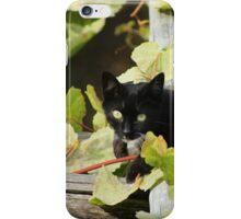 Cat in Grape Leaves iPhone Case/Skin
