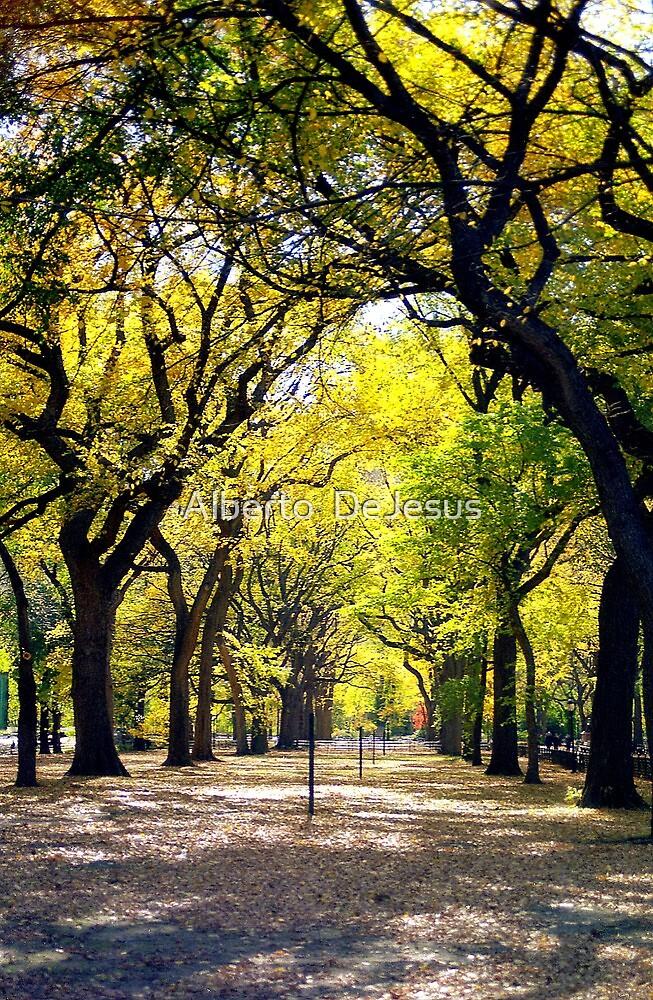 Avenue of Trees, Central Park, NYC by Alberto  DeJesus
