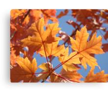 Autumn Leaves art prints Orange Glowing Leaf Blue Sky Baslee Canvas Print