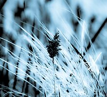 Black and White Wheat germ grass by Marianne Ellis