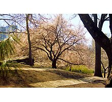 Traces of Spring, Central Park Photographic Print