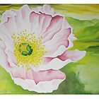 Pink California Poppy ( only Card) by Kim Bender