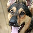 Bindy, Our Fidelco Foster Pup by kremphoto