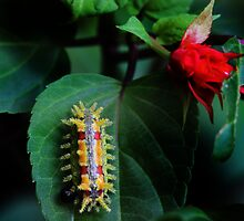 Spiked Caterpillar by Sharon Batdorf