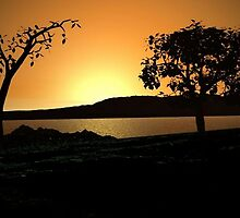Sunset Silhouettes by Norma Jean Lipert
