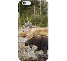 Bull moose - Algonquin Park iPhone Case/Skin