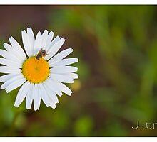 flower by jtran